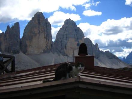 Mieze in Südtirol - Drei Zinnen