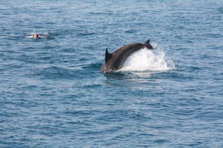 Sie sind wach!  - Delfinschwimmen Delfine & Meer