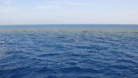 Korallenriff - SimSim-Reisen