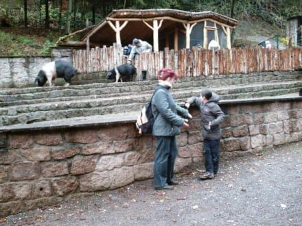 """Vor der """"SCHWEINEREI"""" - Tierpark Suhl"""