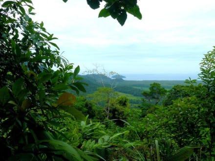 Atemberaubende Natureindrücke - Cape Tribulation
