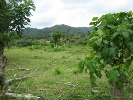 Landschaft Punta Cana - RH Tours Ausflüge Punta Cana