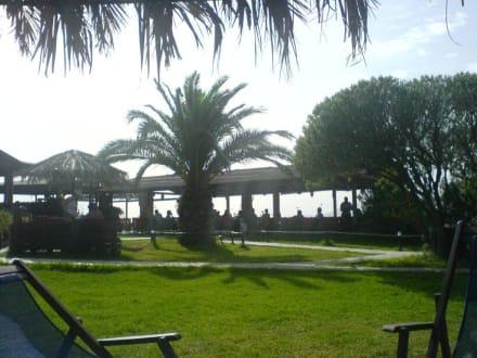 TamTam-Bar - Tam Tam Beach Bar