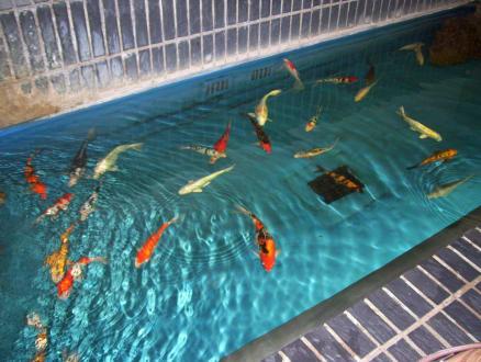 aquarium berlin bild aquarium zoologischer garten in berlin mitte. Black Bedroom Furniture Sets. Home Design Ideas