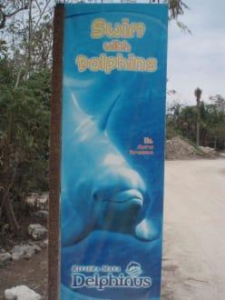 Delphinus - Delfinschwimmen Delphinus Riviera Maya