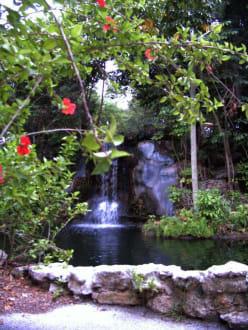 Garden of the Groves - Garden of the Groves