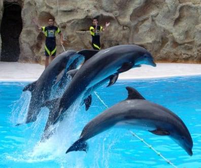 Delphin Show - Loro Parque