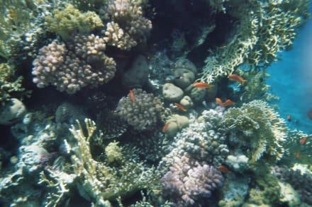 Sonstiges - Tauchen Sharm el Sheikh