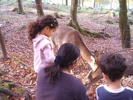 Fütterung der Rehe - Erlebnispark Tripsdrill