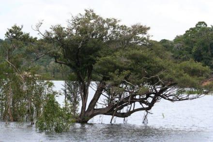 Rivières/lacs/chutes d'eau - Jungle de Manaus