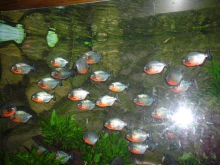 Fische - Loro Parque