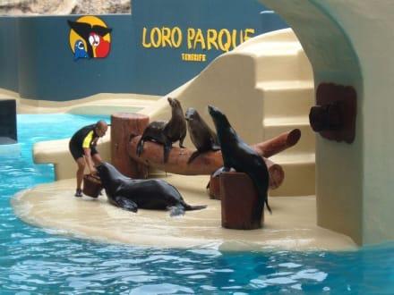 Logo Park/ Seehunde - Loro Parque