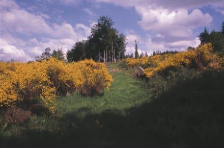 Eifellandschaft - Eifel