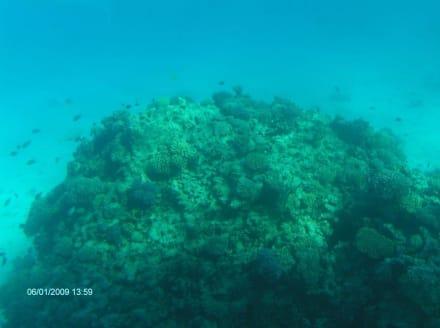 Korallen mit Fischen - Glasbodenboot Tour Hurghada