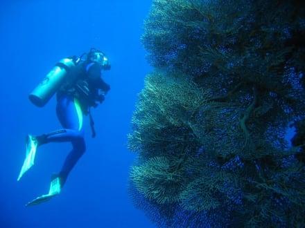 Riesige Korallenbank - Tauchen Sharm el Sheikh