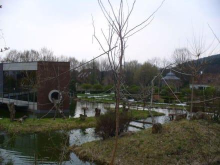 Affenhaus - Tierwelt Herberstein