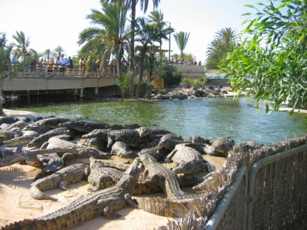 Krokodilfarm auf Djerba - Krokodilfarm Animalia
