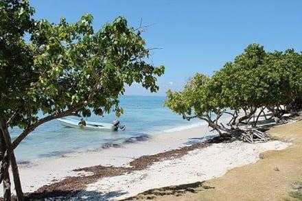Bacardi Insel Dom Rep Karte.Bilder Bacardi Insel Samána Dominikanische Republik Domrep Li