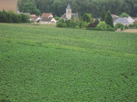 Weinberge bei St. Euphraise/Reims - Champagner