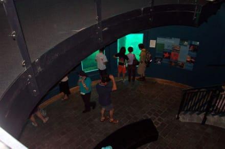 Blick in das Underwater Observatorium - Busselton Jetty