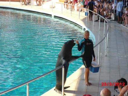 Robbenshow - Sealanya Delfinpark