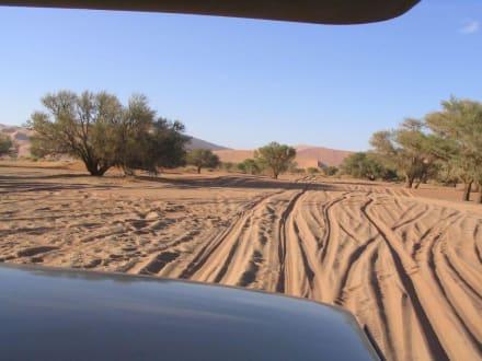 Inmitten der höchsten Sanddünen - Dünen Sossusvlei