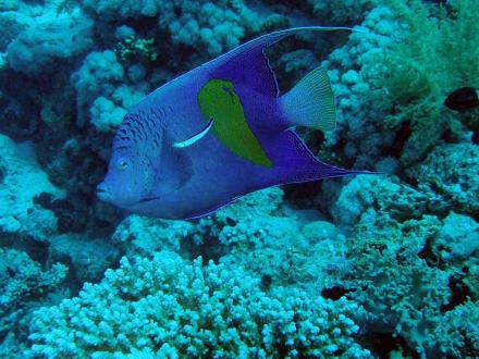 eine wahnsinnig schöne Unterwasserwelt - Tauchen Nabq Bay