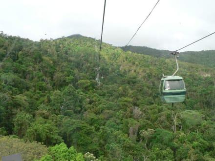 Über dem Regenwald mit der Skyrail - Skyrail Rainforest Cableway