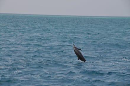 Ausflug: Delphine - Delfin Tour Süd-Malé-Atoll