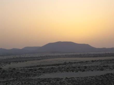 Dolphin House - Wüste