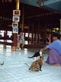 Vorbereitung zum Katzensprung - Tempel der springenden Katzen