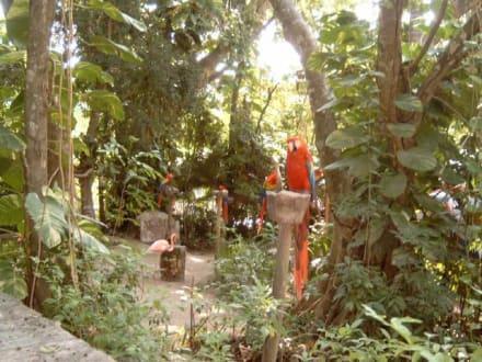 Eingangsbereich - Freizeitpark Xcaret