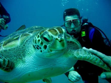 Schildkröten  zum anfassen - Tauchbasis Ocean Trek Playa de las Americas