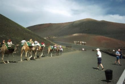 Lanzarote - Kamelreiten Nationalpark Timanfaya