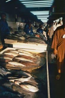 Fischmarkt - Stadtrundfahrt Sharjah