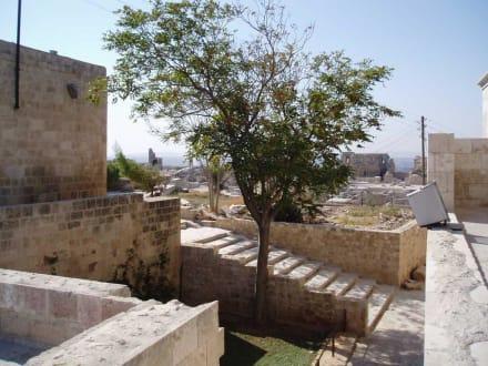 Baum in der Zitadelle - Zitadele von Aleppo