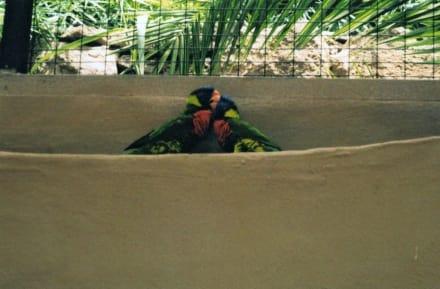 Palmitos Park - Papageien - - Palmitos Park