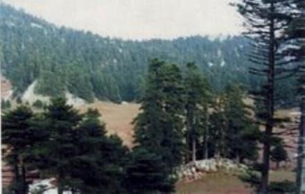 Wald im Steni - Dirfis Gebirge