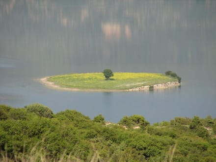 Kleine Insel mit einsamen Baum - Limni Aliakmona  / Kozani