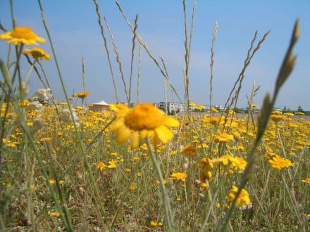 Blumenwiese - Bundesgartenschau 2005 (existiert nicht mehr)