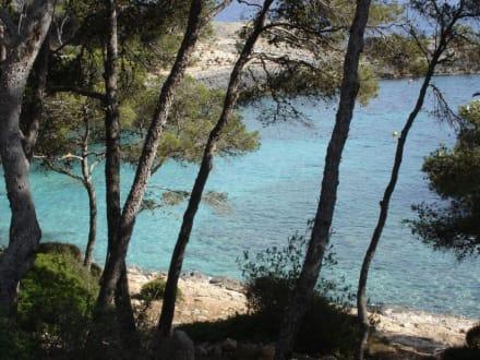 Blick auf die Badebucht - Cala sa Barca