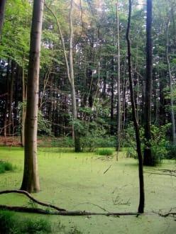 Grüner See im Wald von Blommeskobbel - Hünengräber