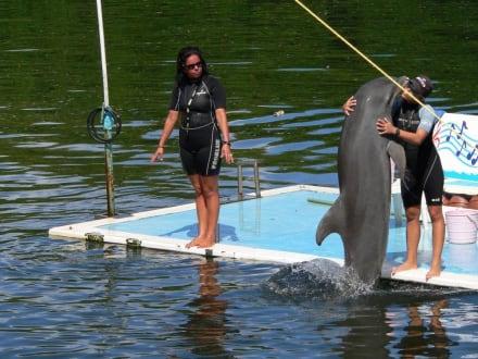 Danke mein lieber Trainer - Delfinarium Varadero