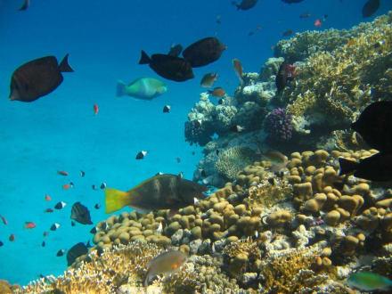 Unterwasserfoto - Tauchen & Schnorcheln Hausriff Mövenpick El Quseir