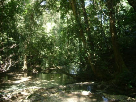 Regenwald in der Anlage der Maya Stätte - Maya Pyramiden Palenque
