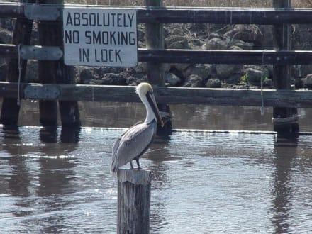Der Pelikan wird es beachten - Ochopee Postamt