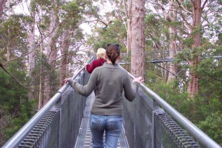 Auf dem Catwalk - Tree Top Walk