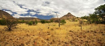 Fußmarsch durch die Savanne - Black Rhino Tour