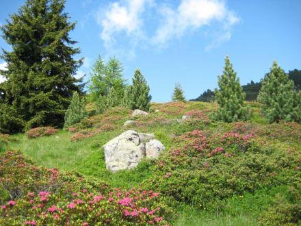 Herrliche Landschaft - Villanderer Alm