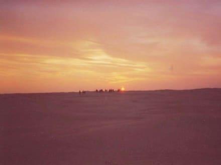 Abendstimmung in der Wüste - Saharaausflug